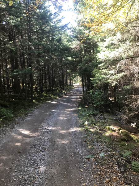 Cheat Mountain Ridge Trail