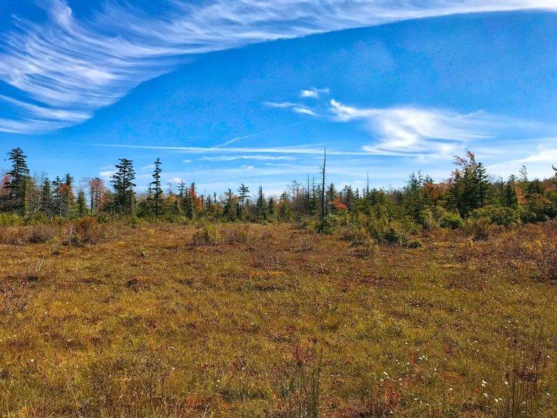 Upper glade on Canaan Loop