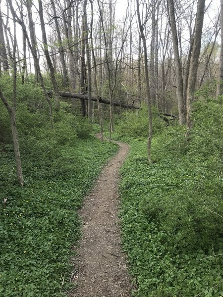 Smooth singletrack in springtime