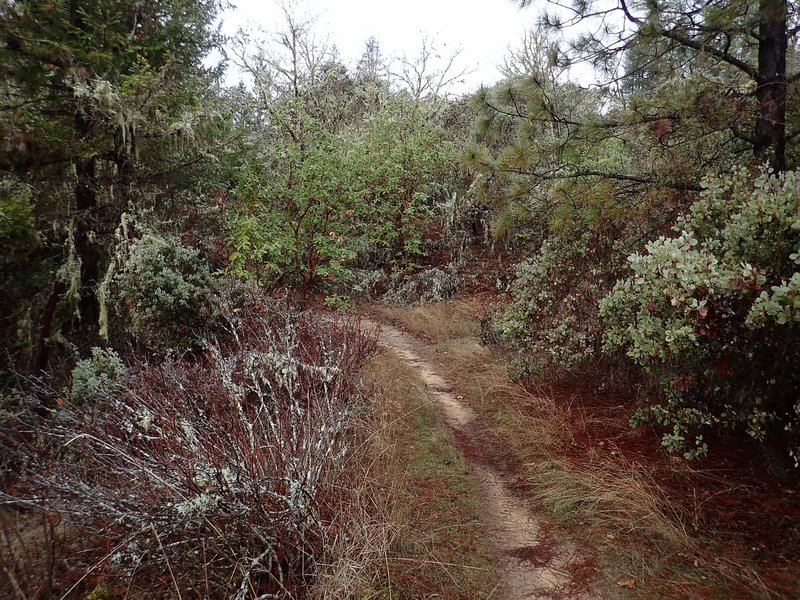 Along the much faded old road which is the Stringer Gap Trail