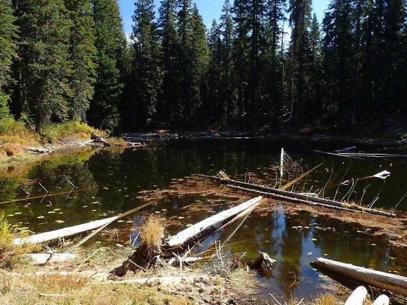 Log Pond