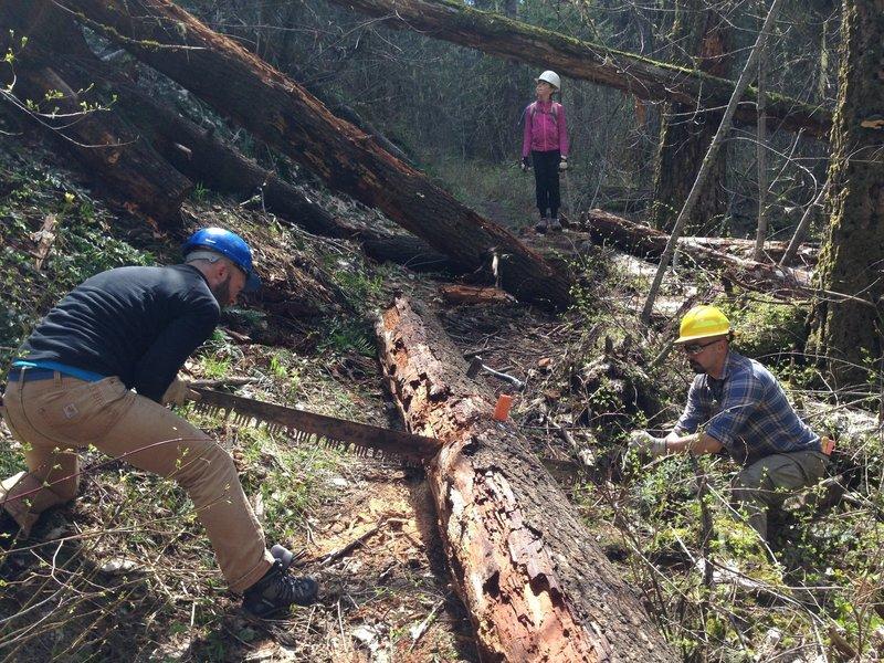 Taking a crosscut saw to the log fall on Buck Creek trail