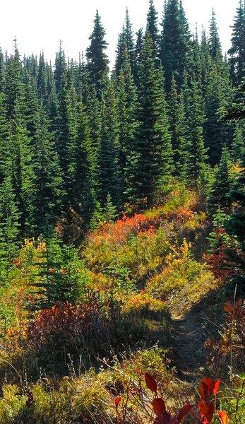 A great fall foliage hike!