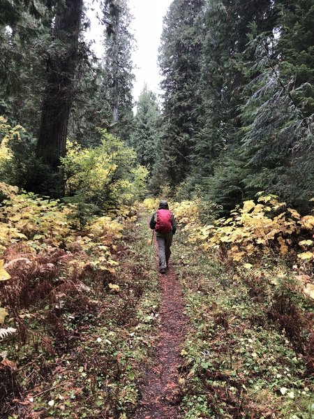 Hughes Meadows Trail, Priest Lake area, Idaho