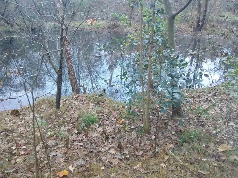 Wildlife in Rocky Branch