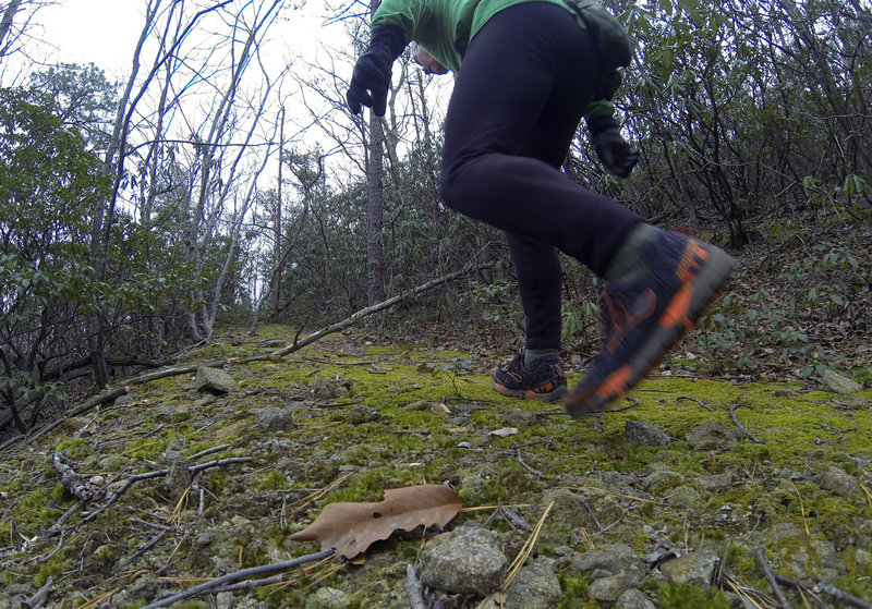 Terrapin Mountain Trail. About 10 miles. Shoes-Brooks Cascadia