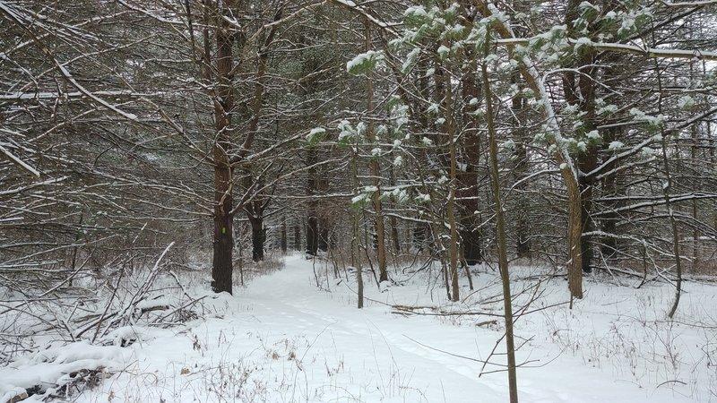 Fresh snowy trail.