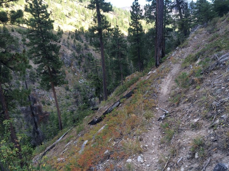 Coming down the lower section of Blue Buck Ridge. Watch out, It's really steep and narrow!