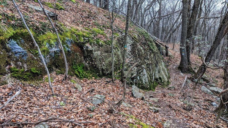 The Lake Hopatcong Trail skirts around many interesting rock formations, this one highlighted by green moss, even in December.