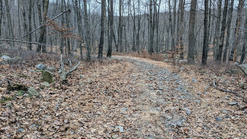 The Lake Hopatcong Trail turns doubletrack (or wider) in the Hopatcong area.