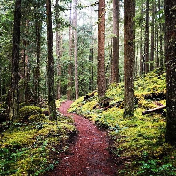 The moss is majestic on the Skookum Flats Trail.