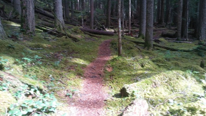 So much green. A thick layer of moss surrounds the trail