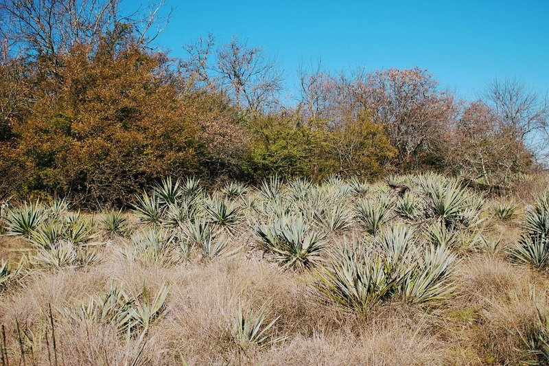 One of the many Yucca fields along the trail. So many birds too!
