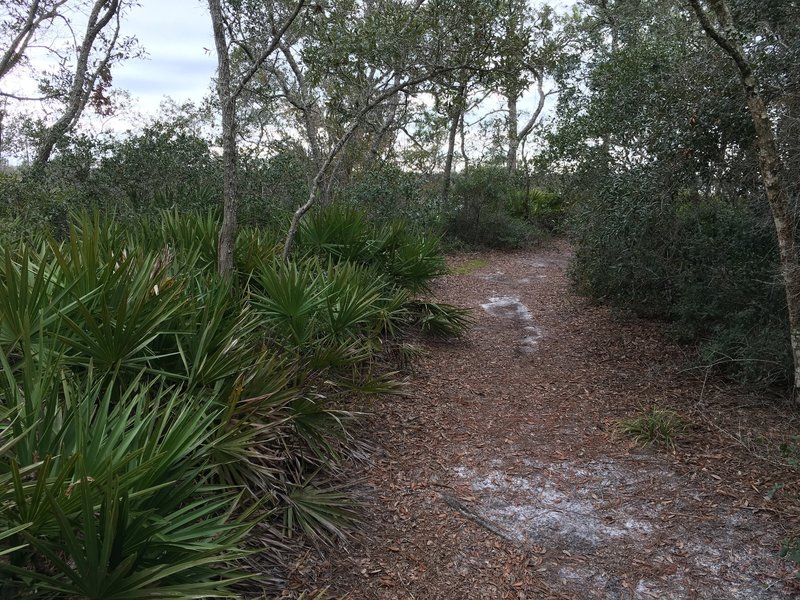 Hard-packed sand trail along Ochlockonee River