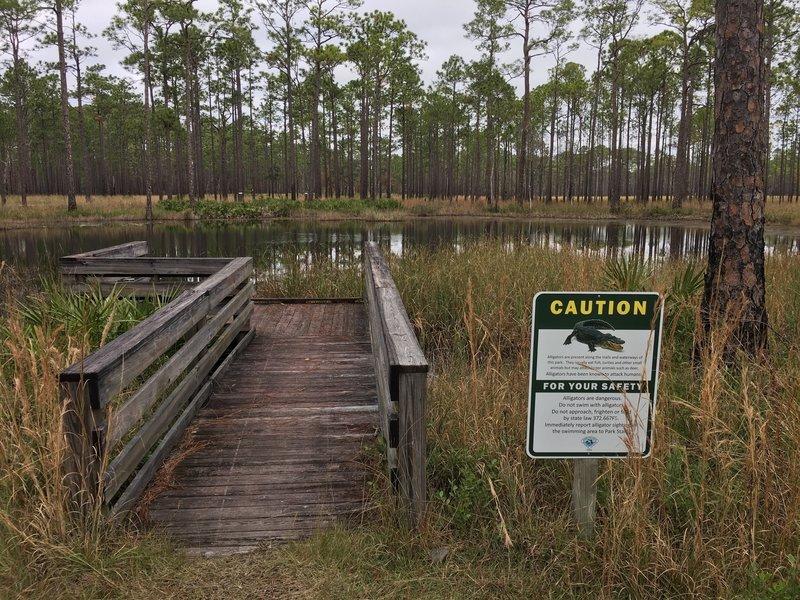 Florida trail hazards.