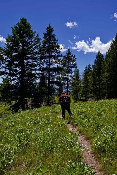 Hiking the Emma Matilda Lake Trail in Grand Teton National Park June 2018