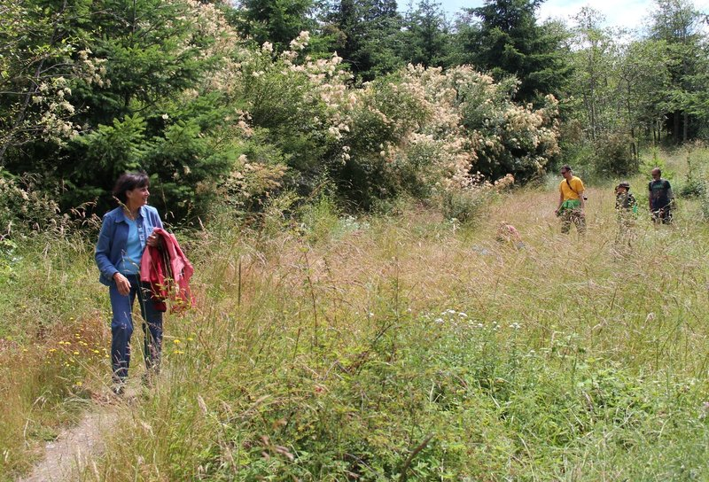 Hiking through the meadow - enjoying the flowing plants and birds.