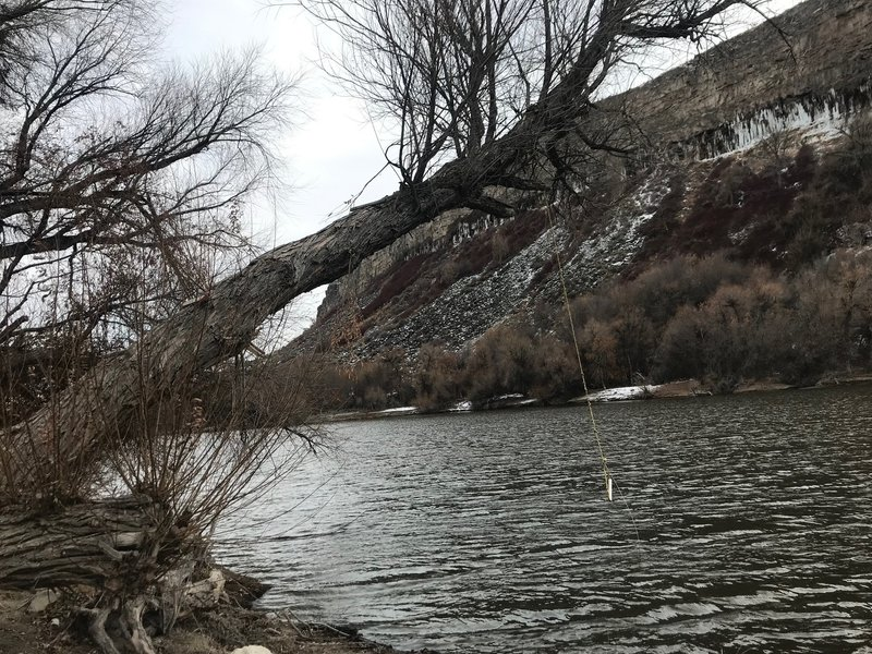 A rope swing hangs from a tree over the Snake River.