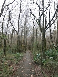 Hiking Trails near Chicot State Park on