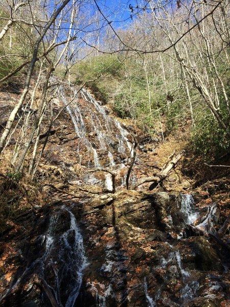 beech creek