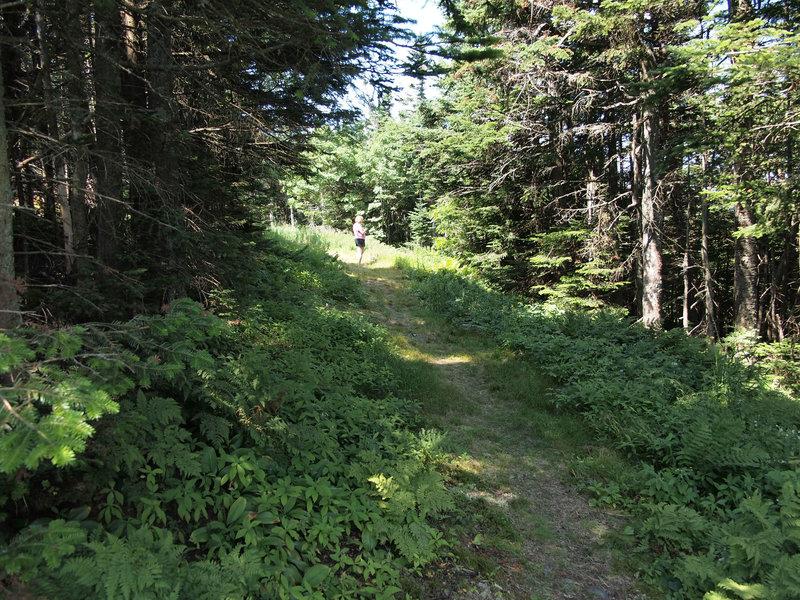 Mt. Snow Trail