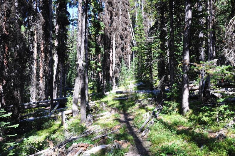Showing view of trail, pretty easy to find/follow and maintained pretty well