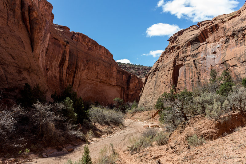 As you enter Little Death Hollow, the trail frequently meanders through the wash