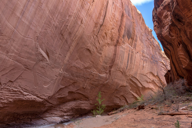 One of several massive overhanging walls, at least 100 feet tall.