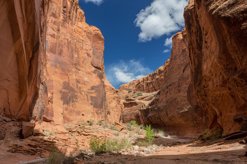 Different water levels have carved alcove-like structures into the canyon walls of Wolverine Canyon