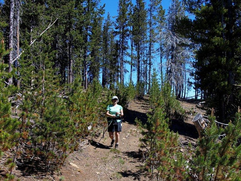 Along the Sunshine Flat Trail