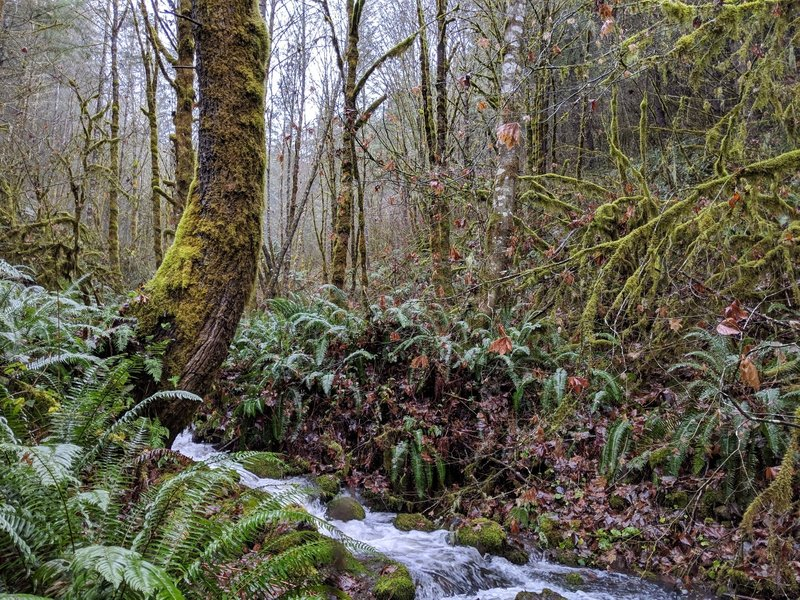 Small unnamed creek in Molalla Trail System