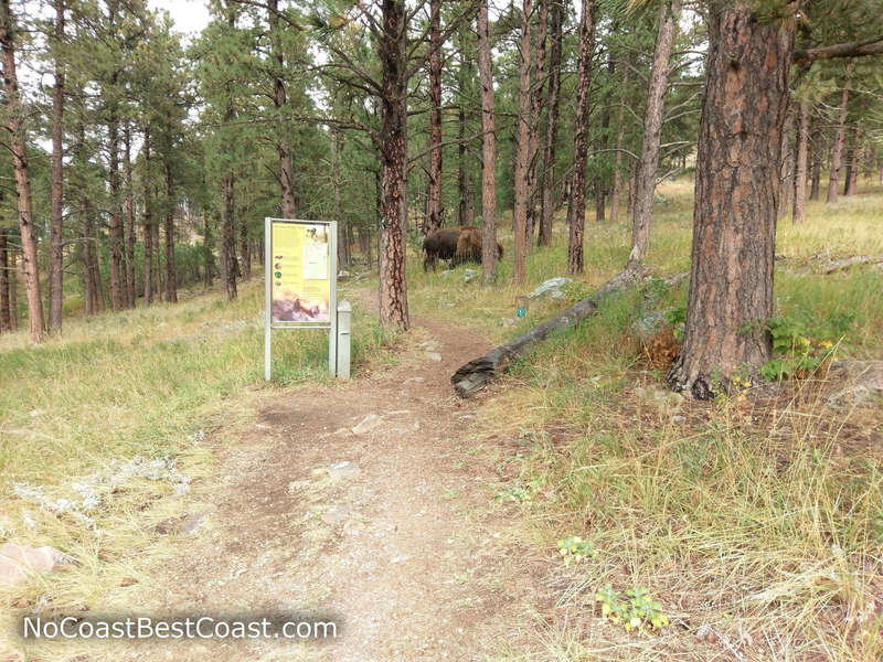Bison seen near the Rankin Ridge Trailhead