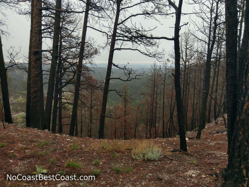 Burnt trees and distant views from the Lover's Leap Trail