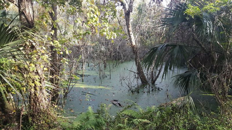 Florida bayhead on east side of trail.