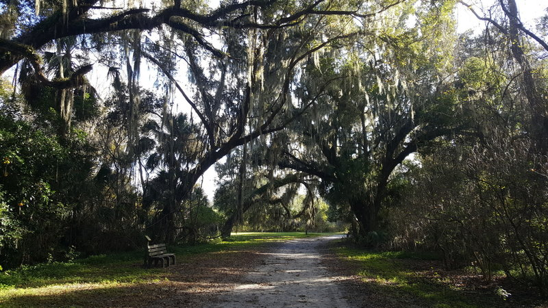 Trail features a number of meadows with majestic live oaks.