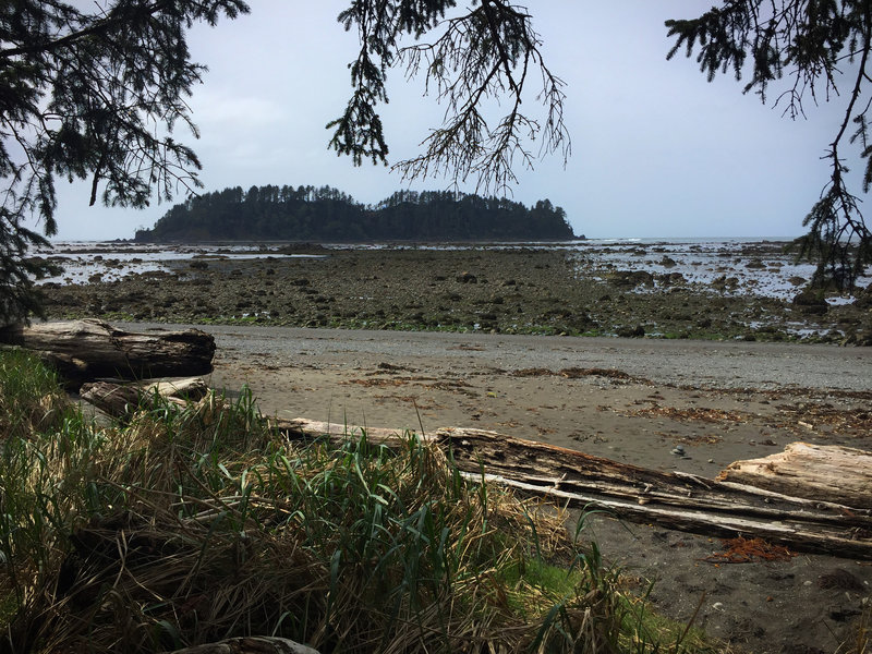 Gap in the trees from Cape Alava at low tide