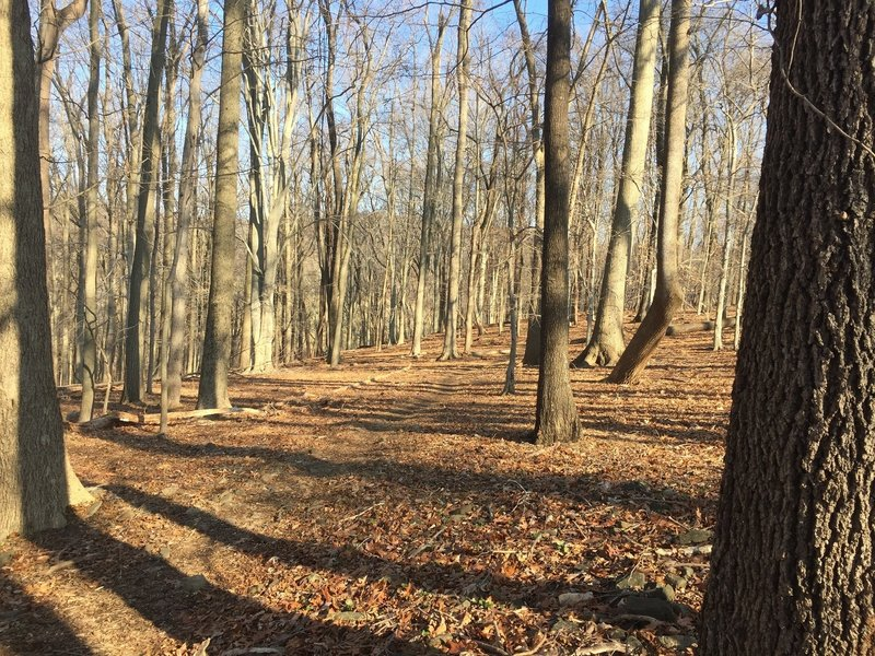 A wooded section of the trail in Marshall Bridge Preserve