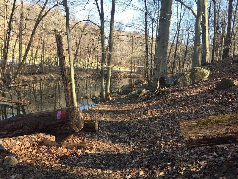 A stream near the trail in Marshall Bridge Preserve