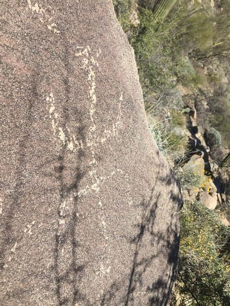 Wild Burro petroglyph