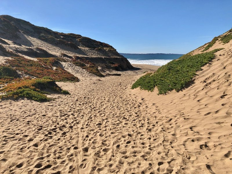 Hiking down to the beach through the Fort Ord dunes