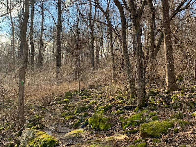 Mossy outcropping.  Several along the trail. Quite magical.