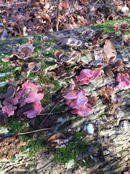 Purple fungi?