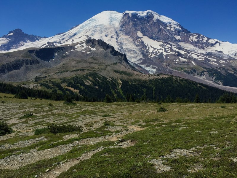 Mt Rainier from Skyscraper Pass, with Third Burroughs in foreground