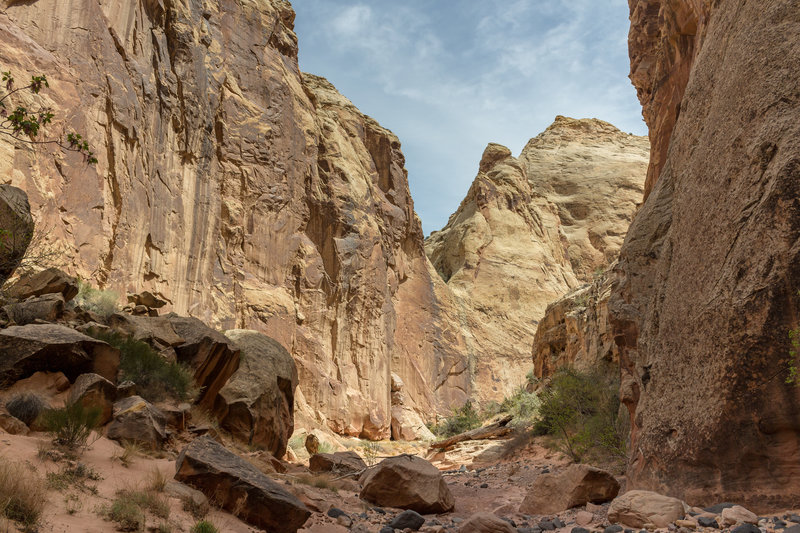 Boulders - big and small - line the way through all of Lower Spring Canyon.