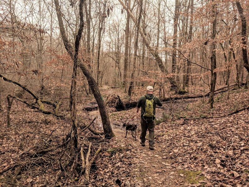 Shoal Creek Trail, approaching wetland crossing.