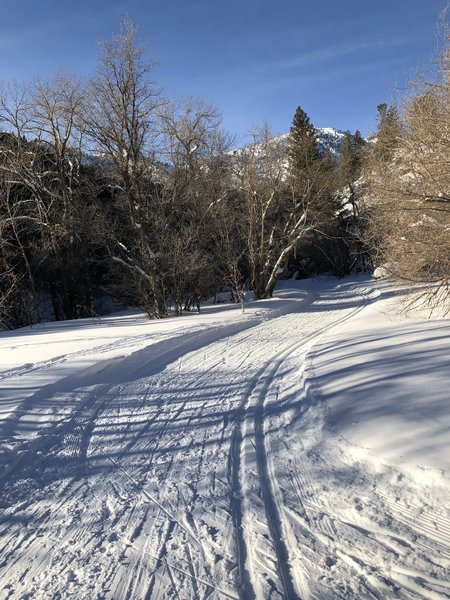 Cross country ski trail up Green Canyon 1/1/2019.