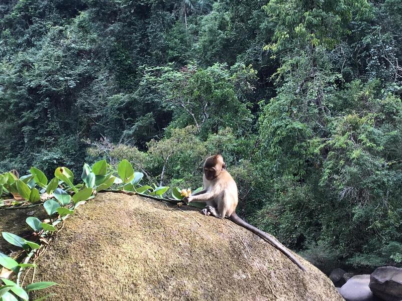 Monkey eating fruits at khao sok main trail