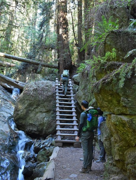 Ladder on Steep Ravine Trail, about a mile from Pan Toll Ranger Station.