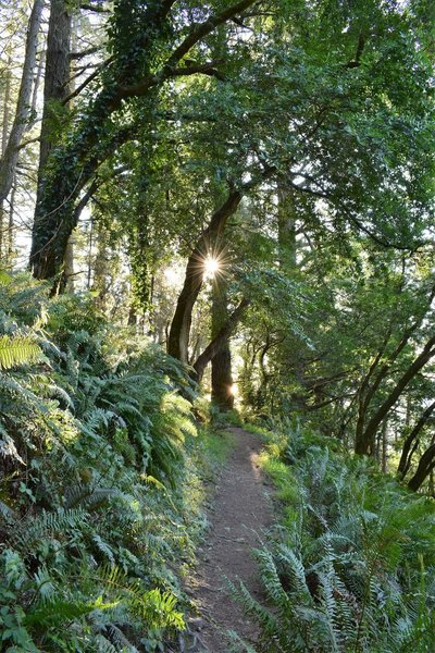 Top of the switchbacks coming up from Stinson Beach on the Matt Davis Trail, just before Coastal Trail junction.