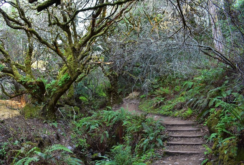 The last set of stairs before Panoramic. Twisty steep drop through the ferns and canyon oaks.